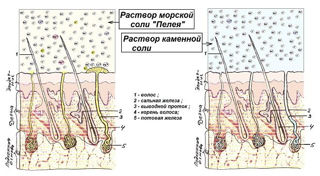 http://stolnia.narod.ru/04a.jpg